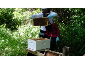 Inspecting A Langstroth Hive