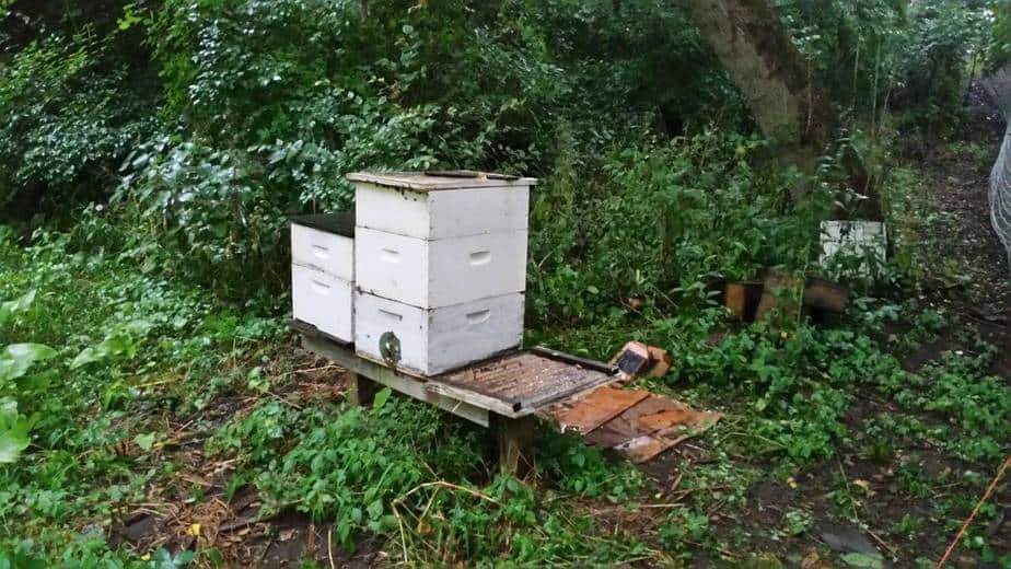 Adding A Hive Body – Transitioning  To Mediums